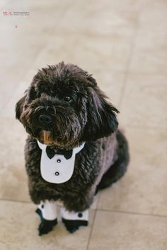Dog Tux--now I want my dog at my wedding. I bet he'd like a trip to Florida. :)