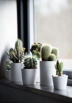 Windowsill decoration - 57 ideas how to discover the potential of the windowsill - window sill decoration cactus plants houseplants - Windowsill Decoration, Decoration Plante, Window Sill Decor, Window Boxes, Plants On Window Sill, Kitchen Window Sill, Window Ledge, Window Ideas, Vases Decor