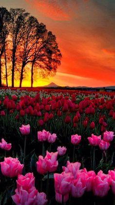 Beautiful Sunrise And Sunset Photography Beautiful World, Beautiful Images, Beautiful Flowers, Beautiful Scenery, Sunset Photography, Amazing Photography, Photography Flowers, Landscape Photography, Spring Photography