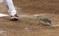 A squirrel - AP Photo/Tom Gannam