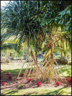 13 mai 2020 - Logement entier à 254 CHF. Blue Hole, Jamaica, Gardens, River, Plants, Negril Jamaica, Planters, Tuin, Plant