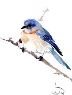 Eastern Bluebird Original watercolor painting 12 X by ORIGINALONLY