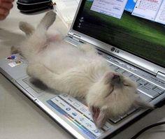 ¡cómodo sitio para hechar una siesta!