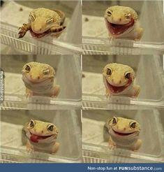 Cute gecko eating a little snack! Leopard Gecko Cute, Cute Gecko, Cute Reptiles, Reptiles And Amphibians, Cute Little Animals, Cute Funny Animals, Funny Cats, Cute Lizard, Tier Fotos