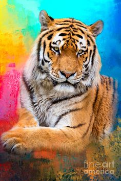 Tiger Digital Art - Tiger In Color by Marco Fischer