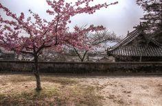 Yoko-zakura | Flickr - Photo Sharing!
