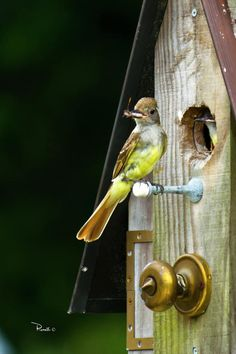 Picture take of a mother bird feeding her baby in a bird house in our back yard.