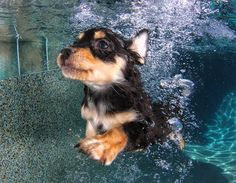 New Underwater Dog Photo Series By Seth Casteel: Underwater Puppies. Do you remember photographer Seth Casteel's adorable underwater dog photography Underwater Dogs, Underwater Swimming, Underwater Photos, Underwater Music, Underwater Photography, Love My Dog, Cute Puppies, Cute Dogs, Dogs And Puppies