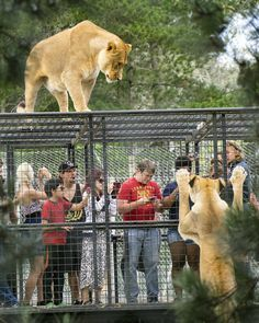 This is how all zoos should be! Orana Park, Christchurch, New Zealand  Instagram photo by @da.mo.jo • #googleguides