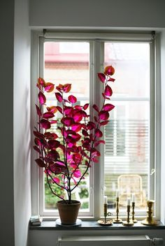 Indoor Gardening Quick, Clean Up, And Pesticide Free - Make Your Own Palettblad - Aprillaprill - Design Inspiration Vardag Green Plants, Potted Plants, Indoor Plants, Purple Plants, Arrangements Ikebana, Plantas Indoor, China Rose, Decoration Plante, Pot Plante