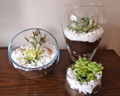 Find out how to make your own terrariums #DIY #home #decor #crafts #terrariums