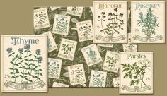 Herbs Illustration, Kitchen Containers, Seed Packaging, Garden Centre, Herb Seeds, Placemat, Container Gardening, Bouquet, Gardens