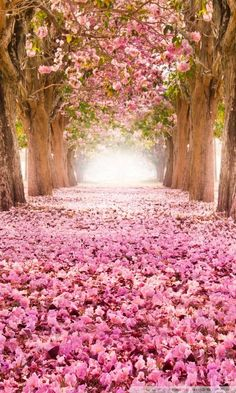 love path wallpaper Nature Beautiful tree Beautiful nature