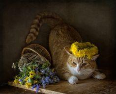 35PHOTO - El. G. - Венок из одуванчиков для Рыжей Кошки