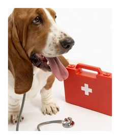 Dog with Pet First Aid kit: Pet First Aid Certificate Course for Cats and Dogs in Toronto, Ontario, Canada.  Learn First Aid for Pets as a Pet Owner or Pet Care Professional