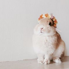 Flower crowns always and always