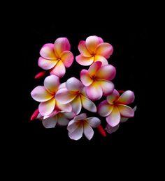 . Plumeria flower