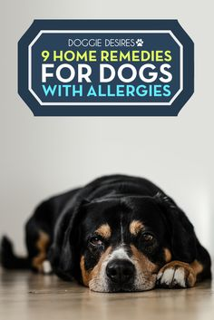9 home remedies for dogs dry itchy skin >> http://doggiedesires.com/home-remedies-dogs-dry-itchy-skin/