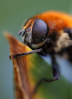 Wild Bee by AnyMotion, via Flickr