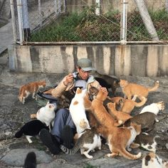 """kim-in-japan: """" the king of cats on cat island """" Kafka On The Shore, Cat People, Cat Lover, Parks And Recreation, Beautiful Cats, Cat Memes, Crazy Cats, Cool Cats, Animal Kingdom"""