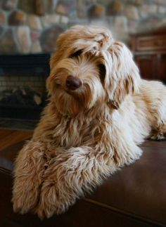 photo ..; sweet fluffy dog with a quizzical look on his face ... makes me smile ...