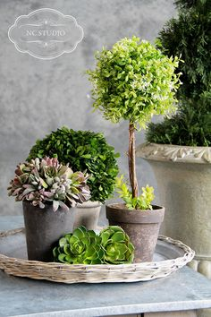 Pretty tabletop topiary and succulents arrangement in a basket tray from Tai Pan Trading