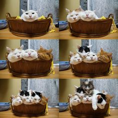 Baskets o' stacked cats