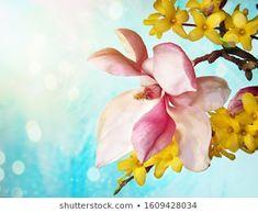 Anna Misslinger: портфолио стоковых фотографий и изображений | Shutterstock Magnolia Branch, Yellow Flowers, Anna, Wedding Day, Happy Birthday, Romantic, Plants, Photography, Painting
