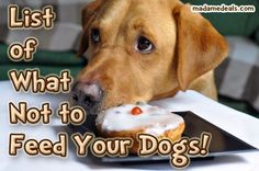 Find out what NOT to feed your dogs ... keep them healthy and safe