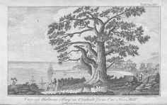 """Matavai Bay from """"One Tree Hill"""" The spot from which Captain Cook's men observed the transit of Venus."""