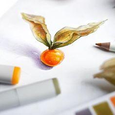Физалису было угодно показаться сегодня в практически идеальной цветовой классической триаде. Я не спорю с физалисом, он явно знает толк  #art_markers #art_we_inspire #topcreator #sketch #illustration #скетч #иллюстрация #скетчбук #ботаника #copic #touchmarker #markerpro_maxgoodz #physalis #botanica #botanicalillustration #CopicColors #copicmarkers