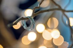 Wedding rings  #wedding #ring #rings #macro #photographer #french #alliance #bague #photographe #mariage