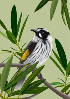 New Holland Honeyeater, Australian Artists, Fine Art Prints, Journal, Bird, Tattoos, Green, Nature, Artwork