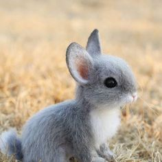 Cute Baby Bunnies, Felt Bunny, Cute Baby Animals, Cute Babies, Needle Felted Animals, Felt Animals, Needle Felting, Grey Bunny, Pet Fox