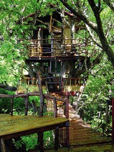 This is the Big Beach in the Sky a treehouse designed by David Greenberg author of Bamboo Architecture The treehouse is near Sanya on Hainan Island
