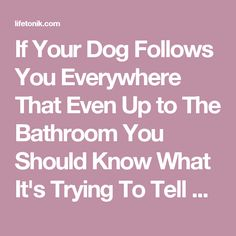 If Your Dog Follows You Everywhere That Even Up to The Bathroom You Should Know What It's Trying To Tell You