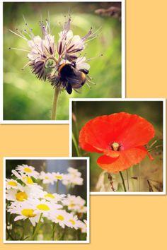 Bloeiende bloemen in de Wildste Tuin.Niet alleen de bijen genieten ervan#Bloemen#NetlPark Dandelion, Flowers, Plants, Dandelions, Plant, Taraxacum Officinale, Royal Icing Flowers, Flower, Florals