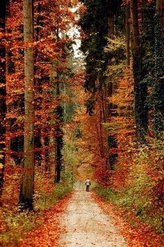 ImageFind images and videos about nature, autumn and forest on We Heart It - the app to get lost in what you love. Beautiful World, Beautiful Places, Beautiful Pictures, Autumn Scenery, Fall Pictures, Autumn Leaves, Autumn Trees, The Great Outdoors, Paths