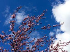 #Frühlingsboten