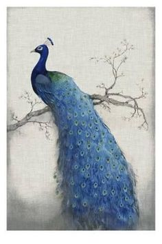 Piy Painting® Beautiful Peacock on the Tree Canvas Prints for Bedroom/Living room, Oil Painting HD Reproduction Wall Art Decoration, Framed, Stretched and Ready to hang (Blue, 1 Panel) Peacock Wall Art, Peacock Painting, Peacock Decor, Diy Painting, Painting Prints, Art Prints, Peacock Blue, Painting Canvas, Framed Prints