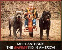 Cane Corso Puppies | Cane Corso Breeders | Cane Corso Mastiff - Click image to find more Humor Pinterest pins