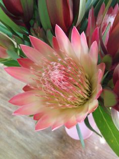 King Protea, Art For Sale, Earth, Studio, Flowers, Plants, Red, Florals, Planters