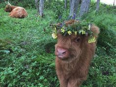 yes its not a dog but I love cute cows Cute Baby Cow, Baby Cows, Cute Cows, Baby Elephants, Fluffy Cows, Fluffy Animals, Cute Little Animals, Cute Funny Animals, Cute Creatures