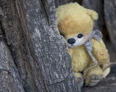 Shy little teddy..
