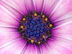 macro photography flowers - Google zoeken