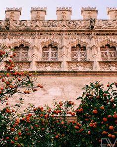 Alicante, Spain, Travel, Instagram, Arquitetura, Orange Trees, Getting To Know, Silk, Italia