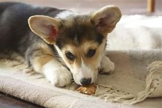 Make your own dog treats with this easy recipe. And just look at that adorable face!