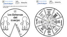 Estupenda ruleta interactiva de sistemas y aparatos del cuerpo humano | Educación Primaria