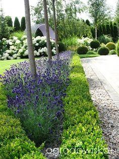 Na zielonej... trawce :) - strona 365 - Forum ogrodnicze - Ogrodowisko
