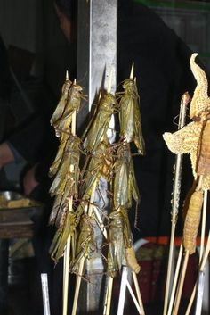 Street Food: Fried Crickets in China Gross Food, Weird Food, Strange Foods, Crazy Food, China Food, Christian Crafts, Jello Recipes, Creepy Stuff, Exotic Food